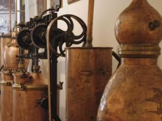 Perfume Factory and wine tasting in Grasse (Var)